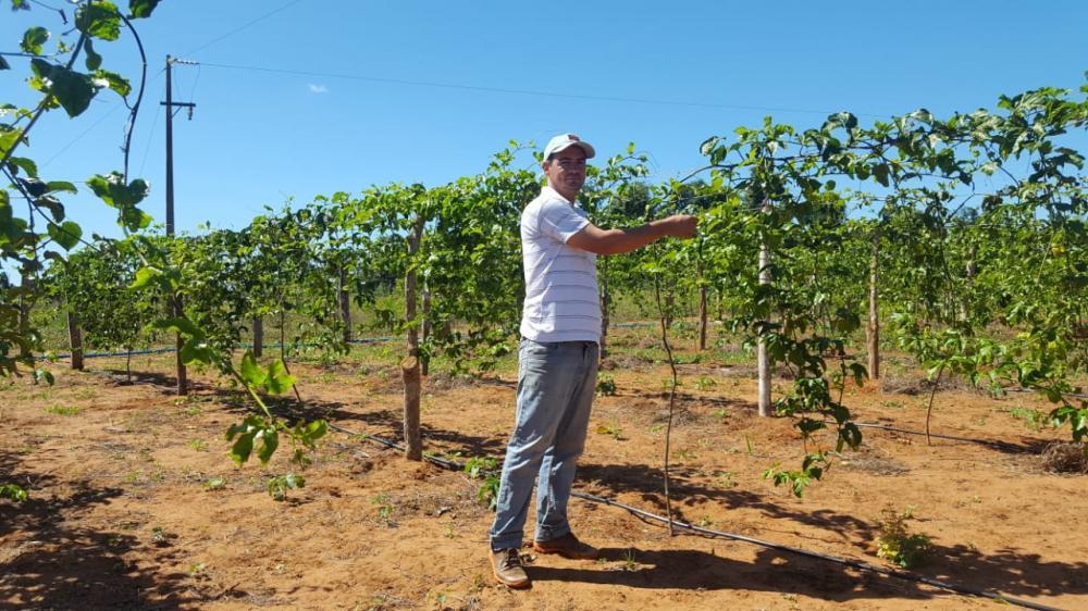 Com apoio técnico do Governo do Tocantins, produtor de Wanderlândia investe na produção tilápia com aproveitamento da água em irrigação de maracujá